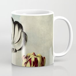 Tulips : Temple of Flora of New illustration of the sexual system of Carolus von Linnaeus Coffee Mug