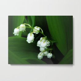 Lily of the Valley - Luscious green floral photograph Metal Print