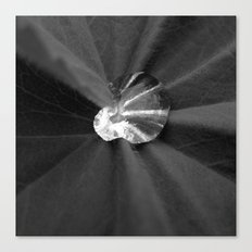 water drop XI Canvas Print