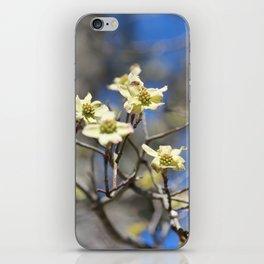 Dogwood In Bloom iPhone Skin