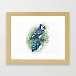 Blue Jay In Watercolor Framed Art Print