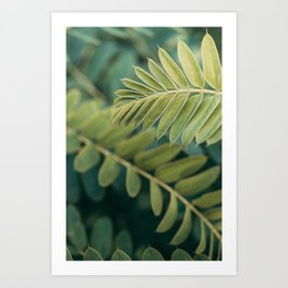 Layers Of Green #1 Art Print