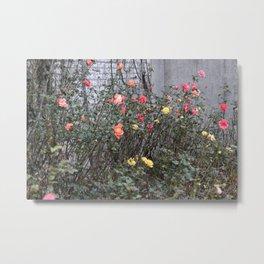 Colorful Roses Metal Print