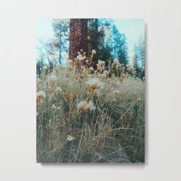 Woodland Trail, Big Bear Lake, California Metal Print