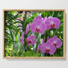 Pink moth orchids Serving Tray