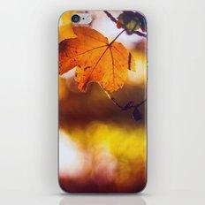 Fall into Autumn iPhone & iPod Skin