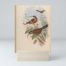 Scimitar bill2 Mini Art Print