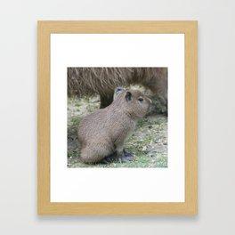 adorable capybara baby Framed Art Print