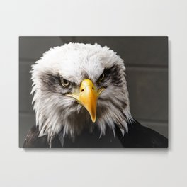 Mean Bald Eagle Metal Print
