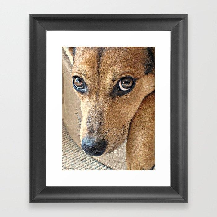 Dog Portrait Framed Art Print