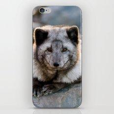 Vulpes Lagopus iPhone Skin
