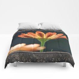 Osteospermum named Sunadora Palermo Comforters