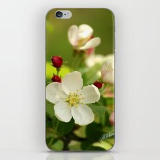 Budding trees iPhone & iPod Skin