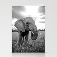 south africa Stationery Cards featuring African Elephant, South Africa by Shannon Wild