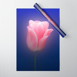 Romantic Pink Solo Tulip On Blue Background Wrapping Paper