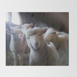 Sheep Looking at Camera Throw Blanket