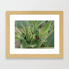 Snug Bug in a Bud Framed Art Print