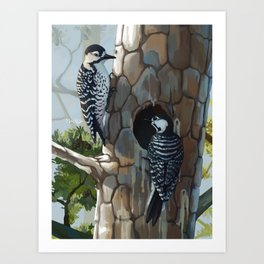 Red-cockaded Woodpeckers Art Print