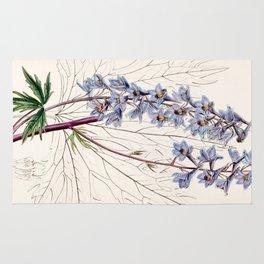 Delphinium elatum palmatifidum/Delphinium intermedium palmatifidum Rug