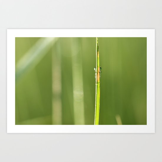 dragonfly is watching you Art Print