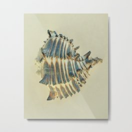 BEAUTIFUL SUBTLE BLUE SEA SHELL - 2 Metal Print