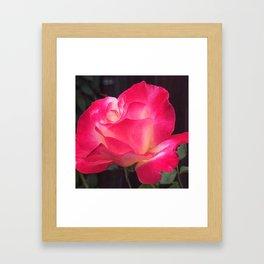 Grandma's Beautiful Rose Untouched Framed Art Print