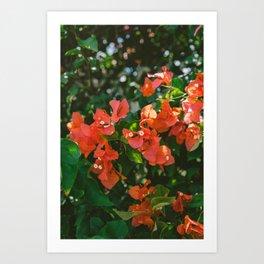 Tropical Hawaii IV Art Print