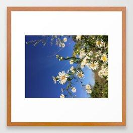 Wildflower on Blue Framed Art Print