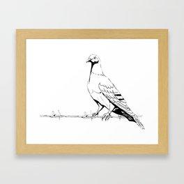 Friedenstaube,Dove of Peace Framed Art Print