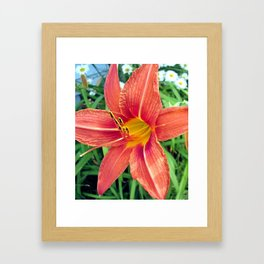 Tiger Lilly Framed Art Print