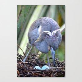 Heron Strengthening Her Nest Canvas Print