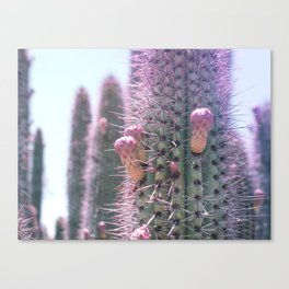 Prickly in Pink II Canvas Print