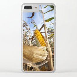 yellowed ripe corn Clear iPhone Case