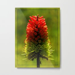 Red Hot Flower Metal Print