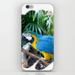 Blue Yellow Macaw. Parrot iPhone Skin