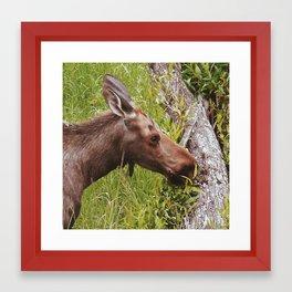 Moose 1 Framed Art Print