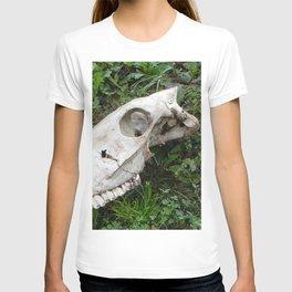 Skull in a field, Photography, animal skull T-shirt