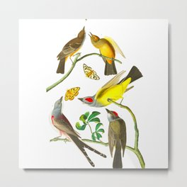 Vintage Scientific Bird Butterfly & Floral Illustration Metal Print