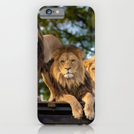 Lion Kings of the Serengeti, Africa iPhone Case