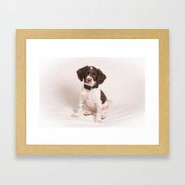 Brittany Puppy Sitting Framed Art Print