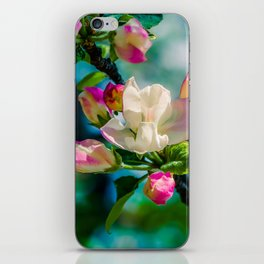 Crabapple flower and buds iPhone Skin