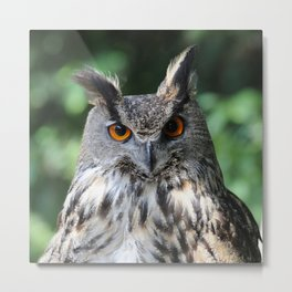 Owl_20180218_by_JAMFoto Metal Print