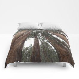 Sky Climbers - Sequoia Comforters