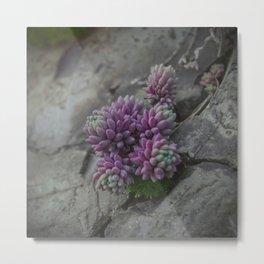 Rock moss - Art macro photography (near the Studen Kladenets dam, Bulgaria) Metal Print