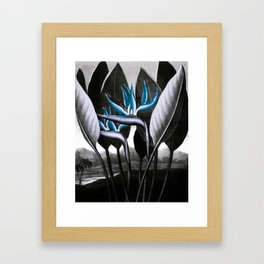 Birds of Paradise Temple of Flora Blue Gray Framed Art Print