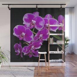 Graceful spray of deep pink orchids Wall Mural