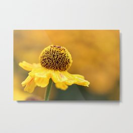 The Golden Hours Metal Print