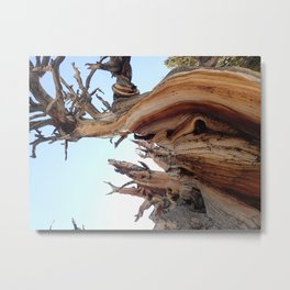 Trees twisting in the wind Metal Print
