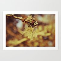 spanish Art Prints featuring Spanish moss by  Alexia Miles photography