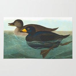 Scoter Duck Vintage Scientific Bird & Botanical Illustration Rug